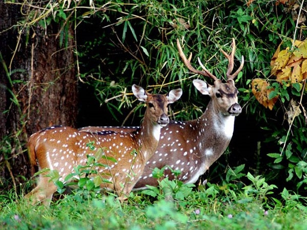 Chinnar Wildlife Sanctuary Tour Packages