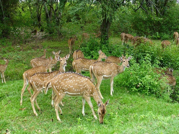 Dandeli Wildlife Sanctuary Tour Packages