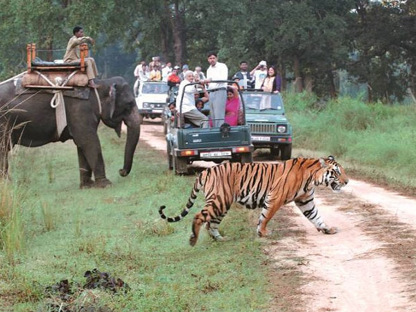 Dudhwa National Park Tour Packages