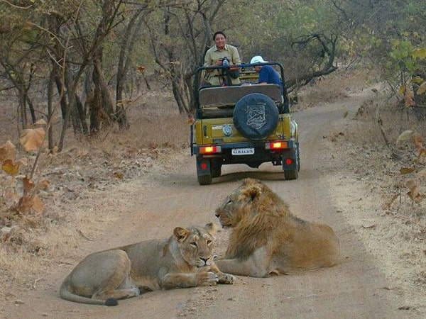 Gir National Park Tour Packages