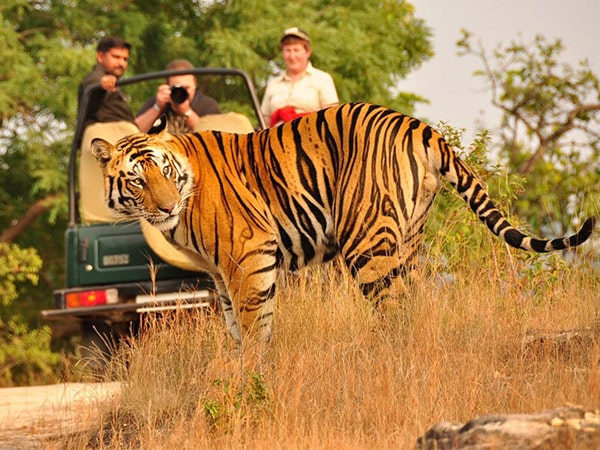 Kanha National Park Tour Packages