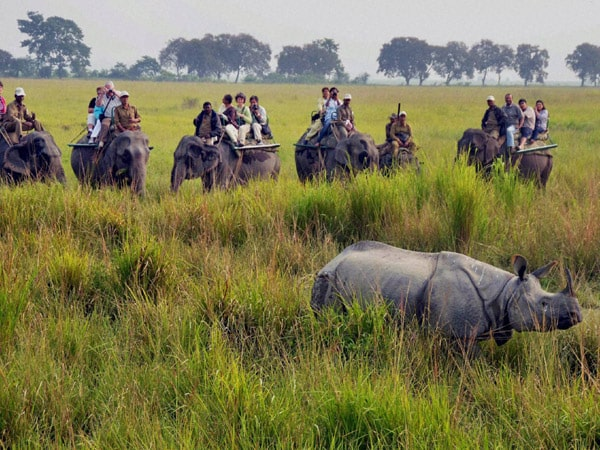 Kaziranga National Park Tour Packages