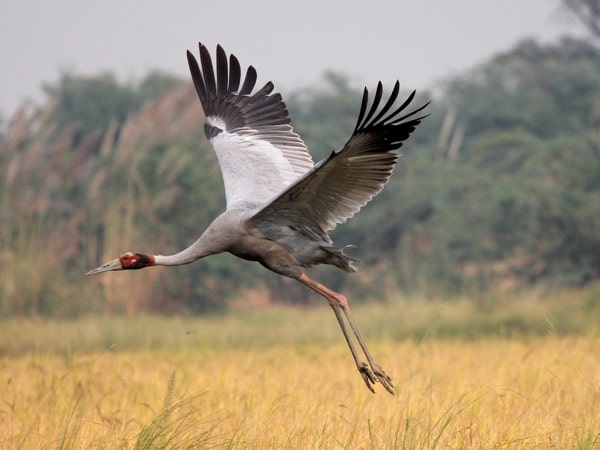 Keoladeo Ghana National Park Tour Packages
