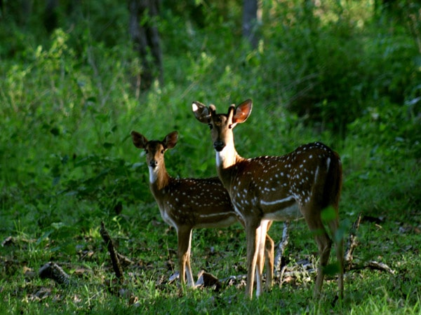 Nagarhole National Park Tour Packages