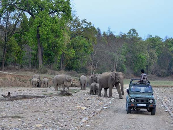 Rajaji National Park Tour Packages
