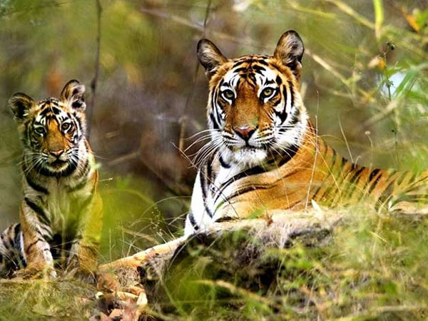 Sariska National Park Tour Packages
