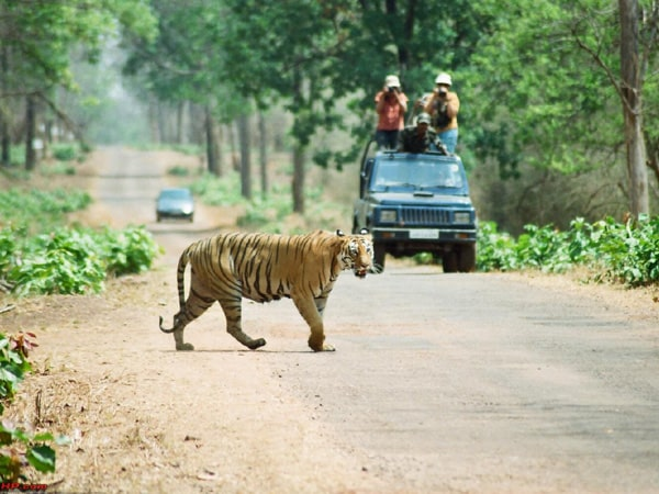 Tadoba Andhari Tiger Reserve Netional Park Tour Packages