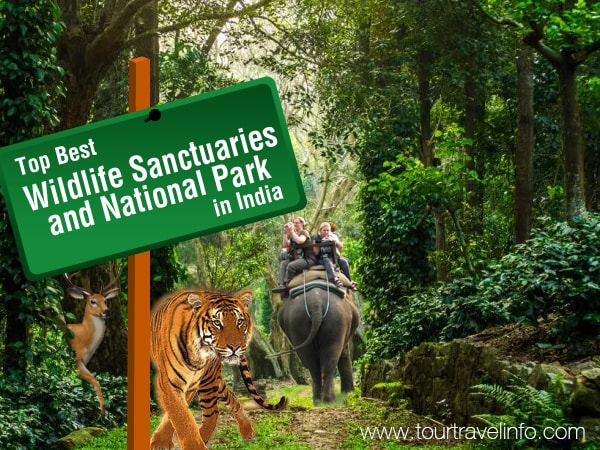 Top Best Wildlife Sanctuaries and National Park in India